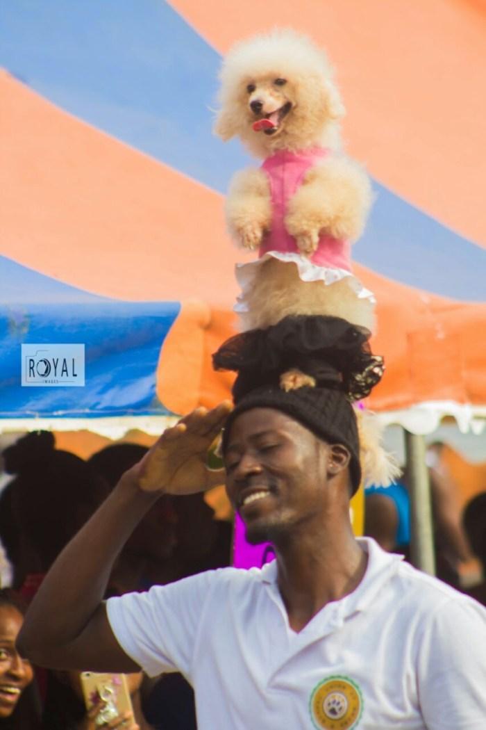 Pent Dog Show 2017 Ghana 7