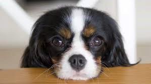 Five practical training hacks to control negative dog behavior 2