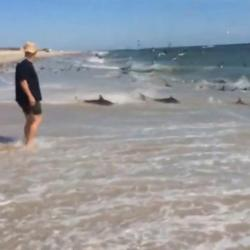 Shark Feeding frenzy in North Carolina