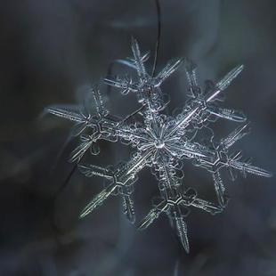 The Birth of a Snowflake