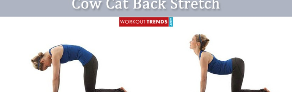 Cow cat back yoga pose stretch