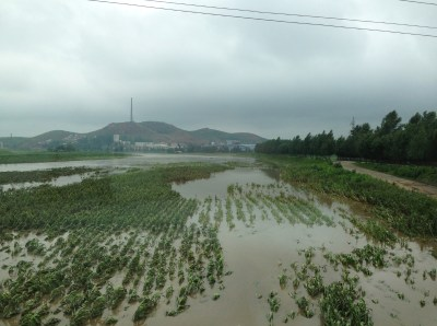 Flooded crops