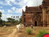 Bagan Temples 3