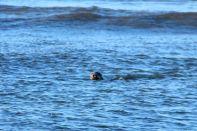 Cape Cod Seal