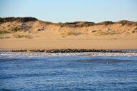 Cape Cod Seals