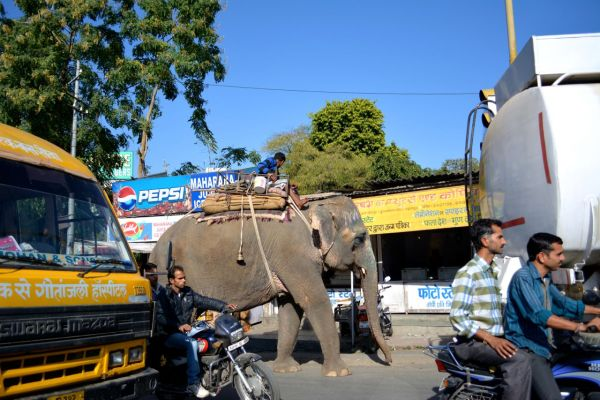 Taking the bus? No, the elephant.