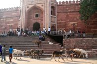 Fatehpur Sikri Steps