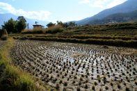 Lobesa Valley Crops
