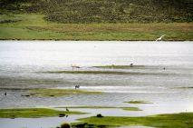 Laguna Lagunillas Lake