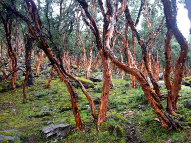 Lares Trek Day 1 Forest
