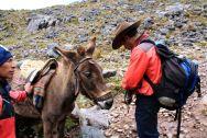 Lares Trek Day 2 Mule