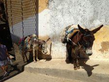 Chouwara Tanneries Donkeys