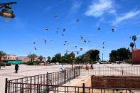 Koutoubia Mosque Pigeons