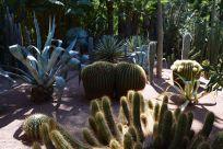 Majorelle Garden Cactus