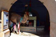 Kairouan Medina Bir Barrouta Camel