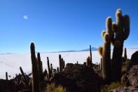Uyuni Salt Flats Isla Incahuasi Alpacas Cacti View