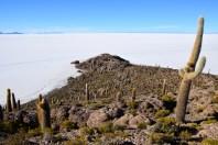 Uyuni Salt Flats Isla Incahuasi Island
