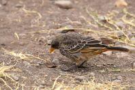 Ngorongoro Crater Bird