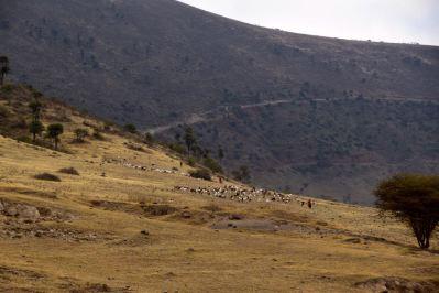 Ngorongoro Crater Herds