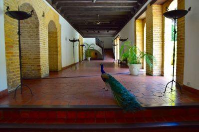 Museo de las Casas Reales Peacock
