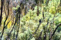 Kilimanjaro Mandara Hut Hike Bird
