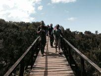 Kilimanjaro Mandara Hut Hike Bridge 2