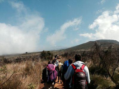 Kilimanjaro Mandara Hut Hike Tall Grass
