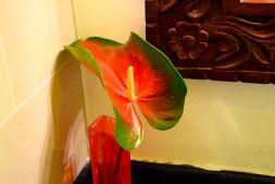 Next Paradise Bathroom Flower