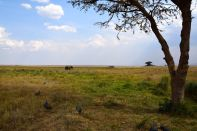 Serengeti Elephant Truck and Tree