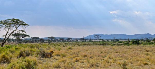 Serengeti Header