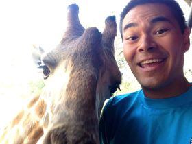 Giraffe selfie!