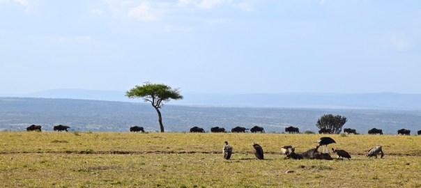 Maasai Mara Header