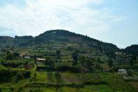 Drive to Kampala Farmland
