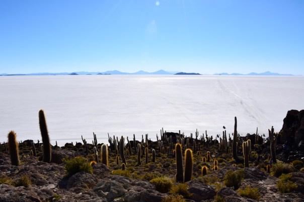 Uyuni Salt Flats Isla Incahuasi Cacti View