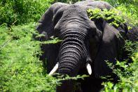 Self Drive Elephant