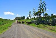 Lesotho Herders
