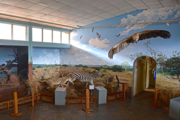 Swaziland National Museum Animals