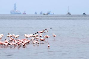 Sandwich Harbor Flamingos