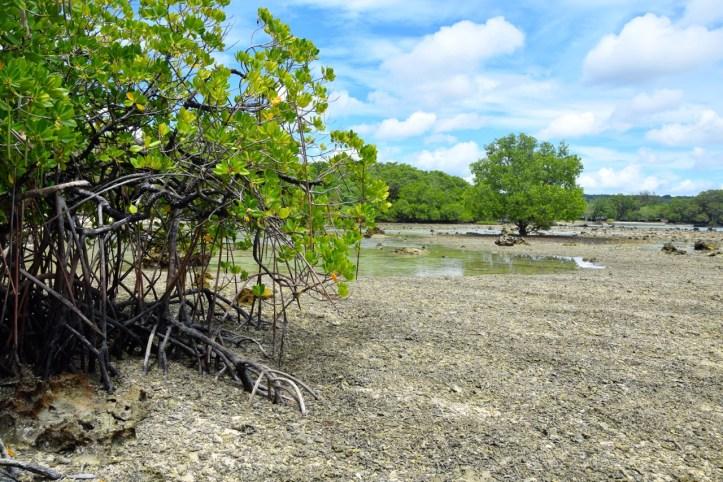 sunrise-beach-cabanas-island-mangrove