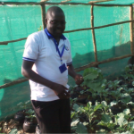 Director for World Faith Kampala participating  in the harvest of vegetables