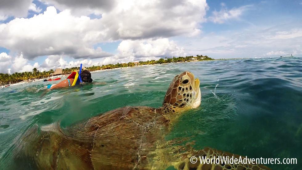 Swimming with Endangered Green Sea Turtles at Akumal Beach