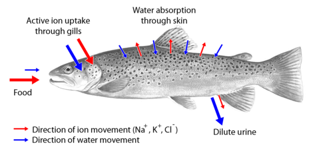 Understanding Water Quality for Aquaculture   WorldWide Aquaculture