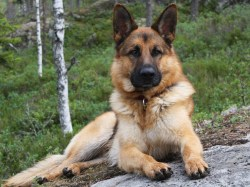 Stylized Dog Breeds Friend Most Loyal Here Are Most Loyal Dog Breeds Most Loyal Dog Breeds Reddit Most Loyal Dog Breeds Order