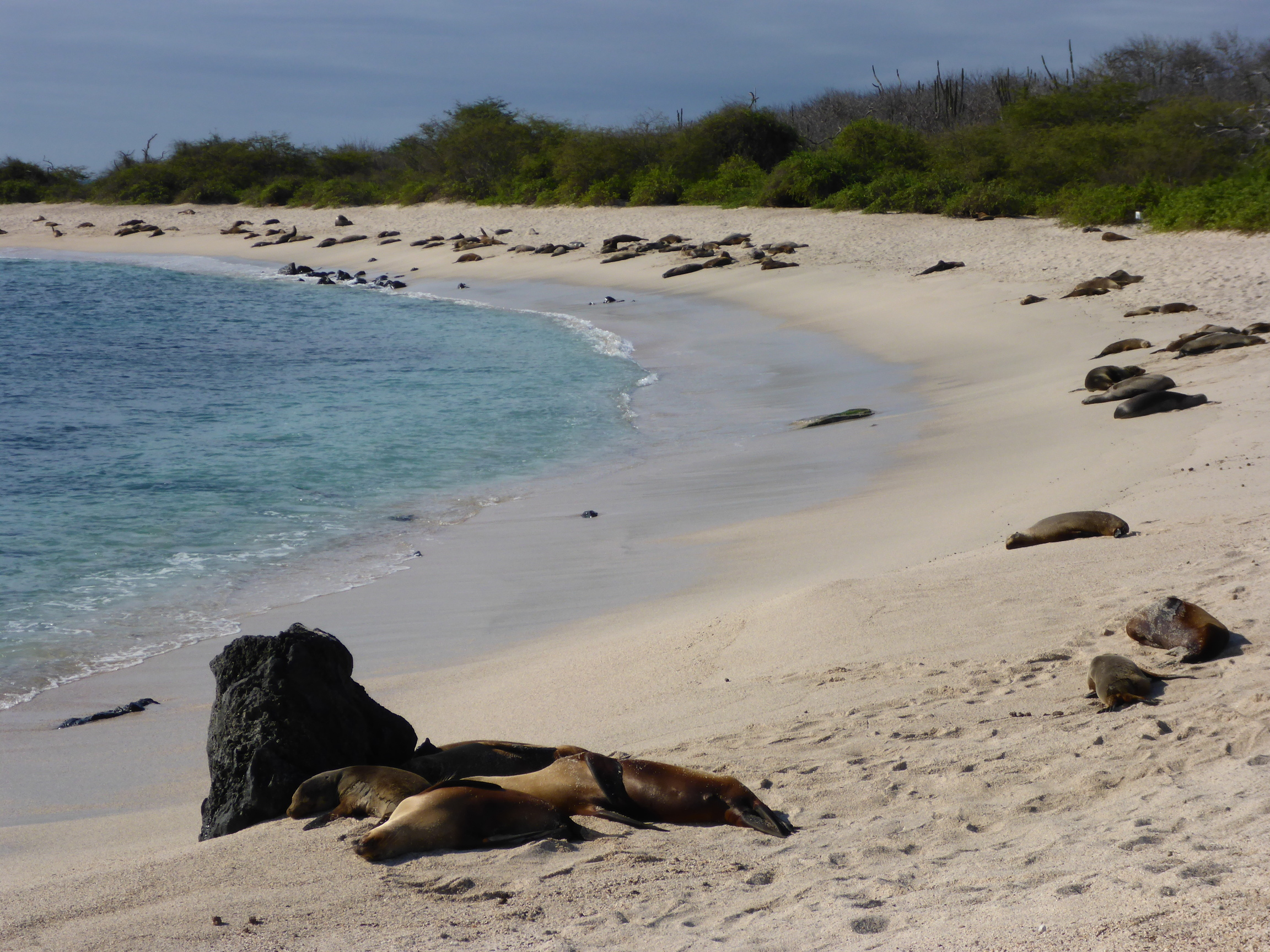 the galapagos islands 2 essay The galapagos islands are one of those places, where every little thing, even the  most insignificant, becomes something to capture forever in a.