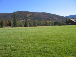 Pictured: A grass field.  This has nothing to do with The Field but it looks nice,