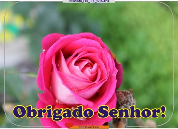 JTWw_20120616_Flor_EPL_2705