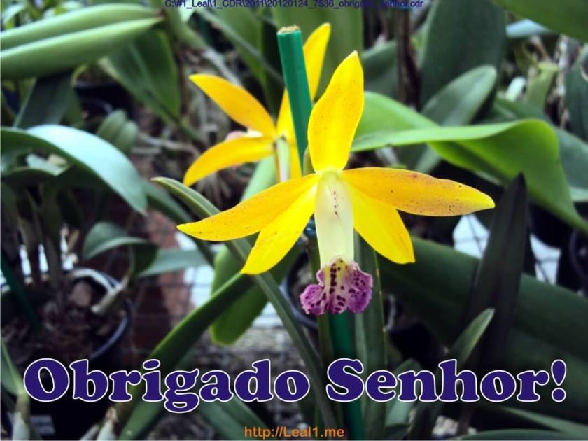20120124_7536_obrigado_senhor