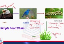 Photo of Food chain & Food Web