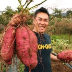 Natural GMO? Sweet Potato Genetically Modified 8,000 Years Ago