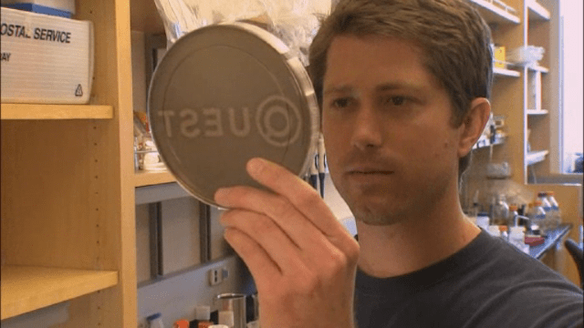 QUEST: Decoding Synthetic Biology
